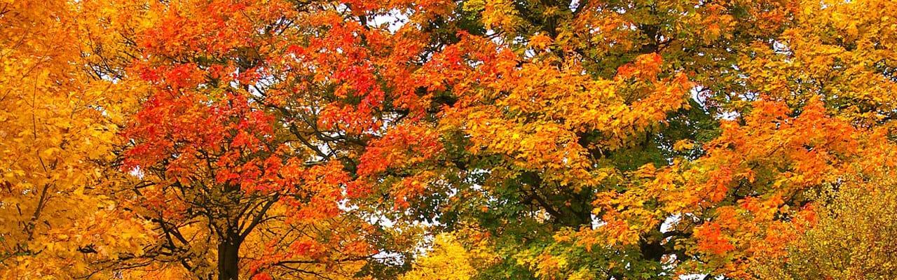 fall leaf color northern virginia