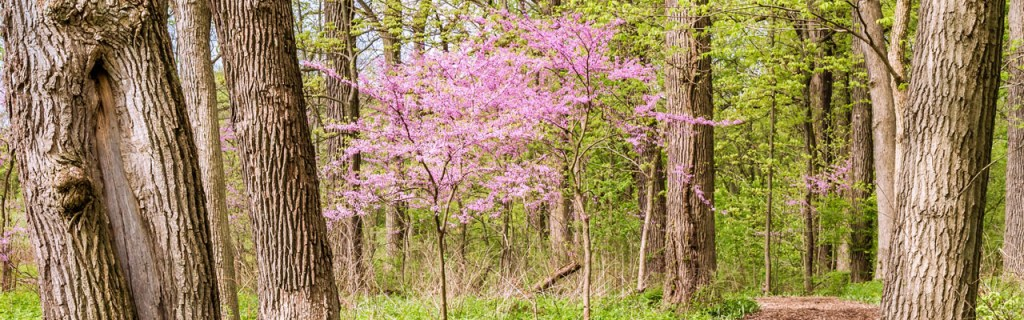 small trees for small spaces northern Virginia