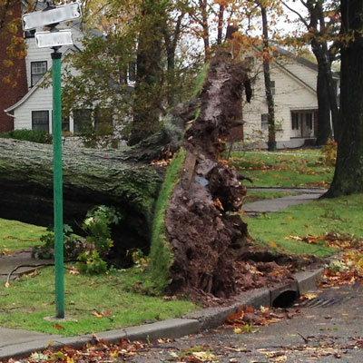downed tree storm damage