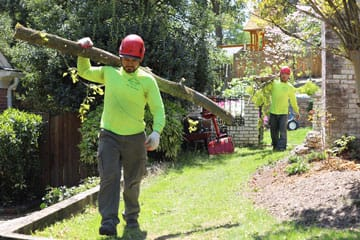 tree removal - carrying branches