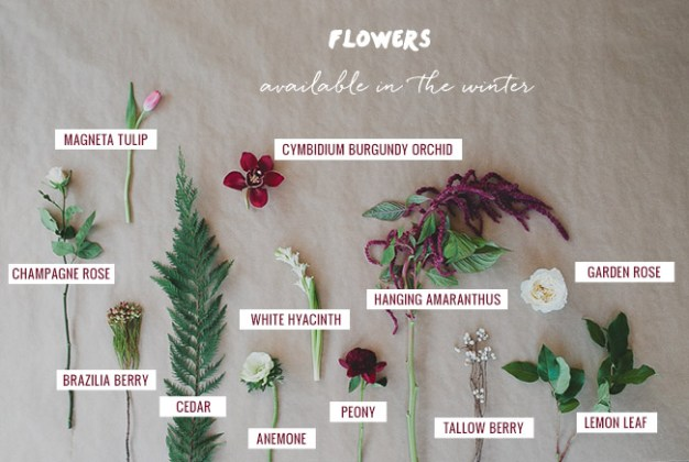 Seasonal Flower Guide  Winter Seasonal Flower Guide  Winter  Flowers available in the Winter