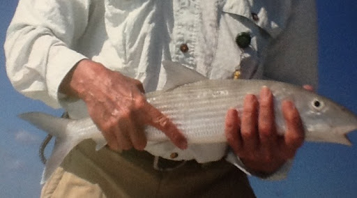 Bonefish, Great harbour Cay, Bahamas