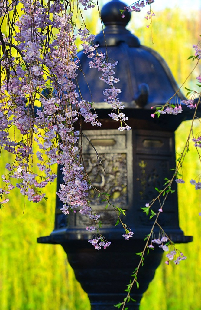 japanese lantern public garden boston