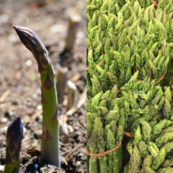 seasonal vegetables asparagus spring