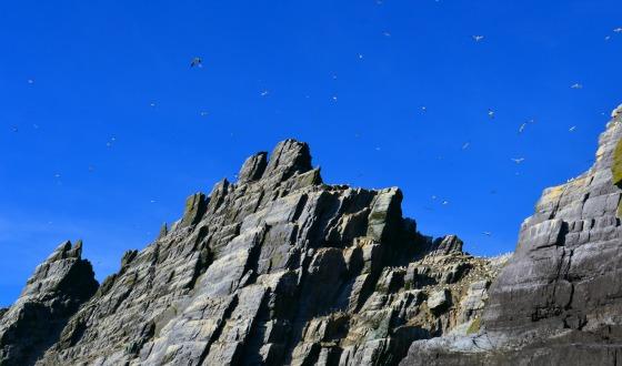 ireland-skellig-little-birds-alison-abbott