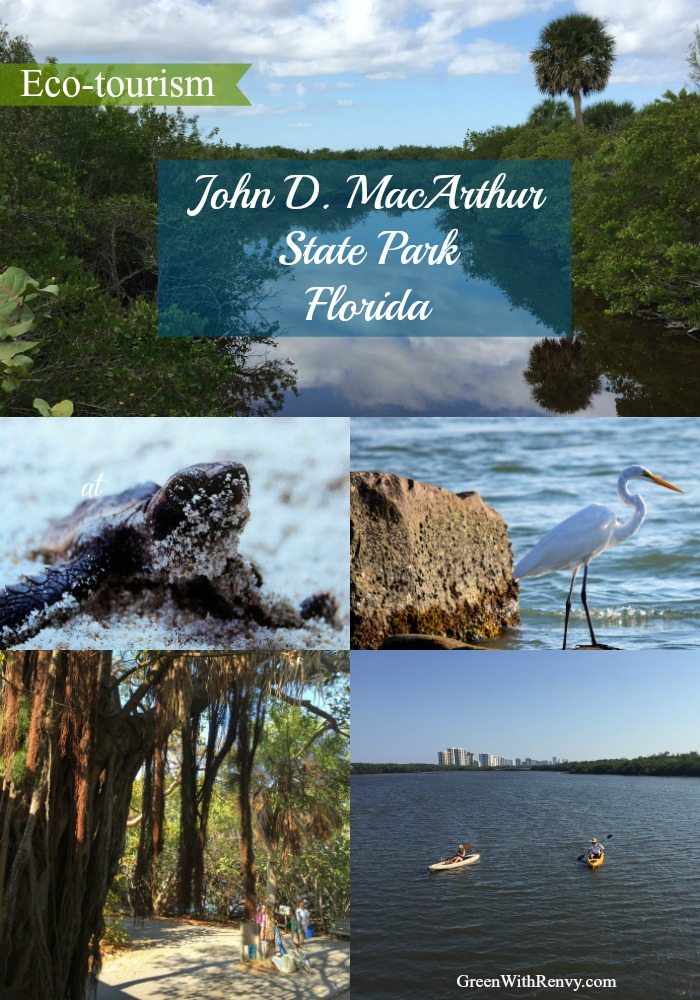 Wildlife and beautiful beaches await at MacArthur state park in Florida