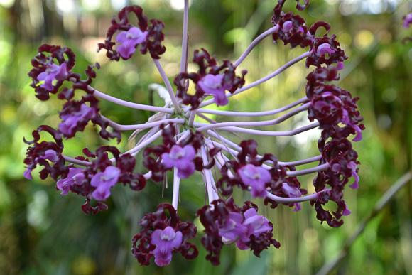 Orchid at atlanta botanical garden