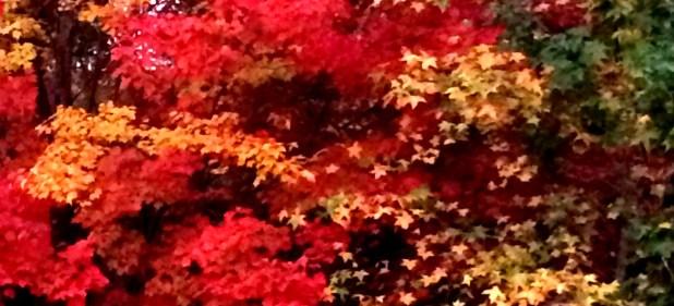 fall 2 copy