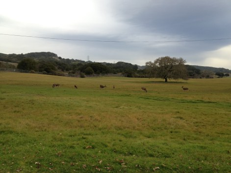 I'm greeted on the second week of class by a large herd of deer grazing in the front meadow.