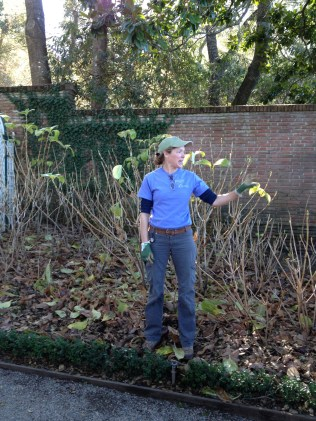 Proper pruning of hydrangeas. Personally, I'm a bigger fan of Oakleaf Hydrangeas, but we covered those, too.