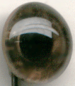 Tohickon - BIRDS OF PREY GLASS EYES