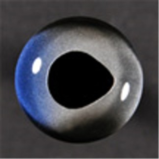 Fish Eyes, Sailfish 6mm