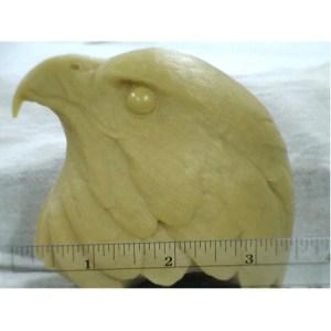 Hawk, Red Tail- Head study by R. Martin study cast