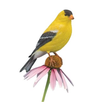 Goldfinch, American, Jerry Simchuk