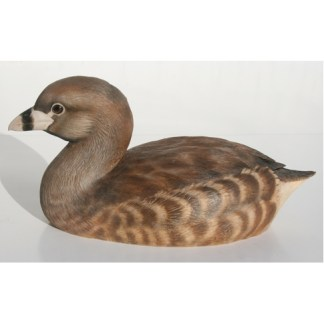 Grebe, Pied-billed 1/2 size, by R. Martin study cast