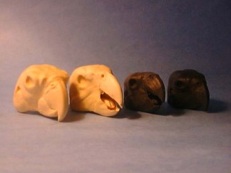 PARROTT, AFRICAN GREY  O/M #597 reference cast heads