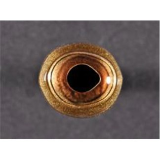 Muskie / Redfish  150 Series Oval 32mm