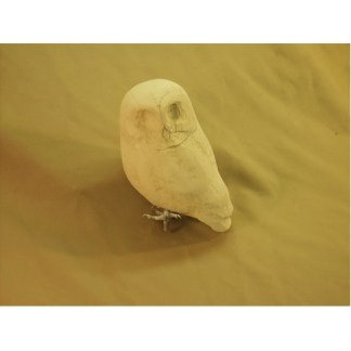 Saw whet owl - Tupelo Roughout