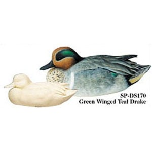 Green-Winged Teal, Drake, Study Cast