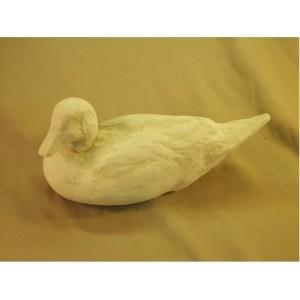 Wigeon hen head down - Tupelo Roughout