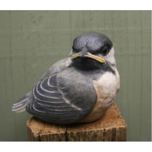 Chickadee, baby birds - by R. Martin study cast