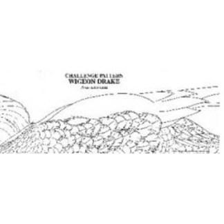 Pat Godin, Common Goldeneye Drake  Challenge Pattern  (preening