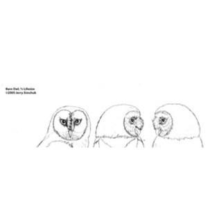 Owl, Barn (1/2 life size), Jerry Simchuk Pattern