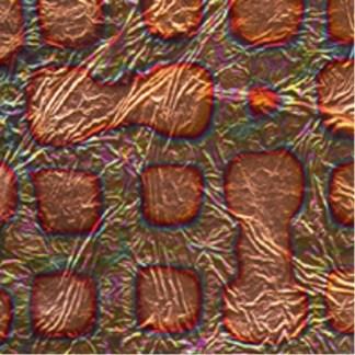 Variegated Leaf -Labyrinth Copper
