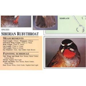 Harou Uchiyama Songbird Patterns  Siberian Ruby-Throat