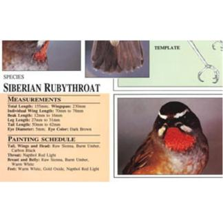 Harou Uchiyama Songbird Patterns  Siberian Ruby-Throat