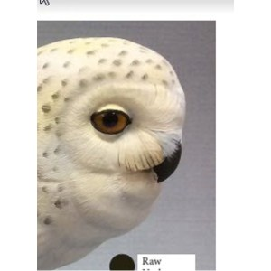Snowy Owl Color Card Al Jordan