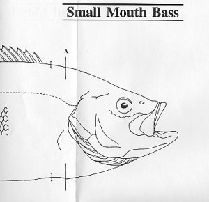 Fish Patterns by Jeff Compton