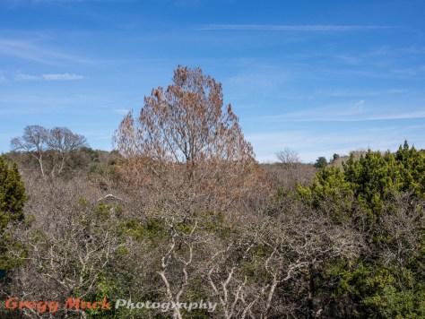 20130203_Bare_Trees_004