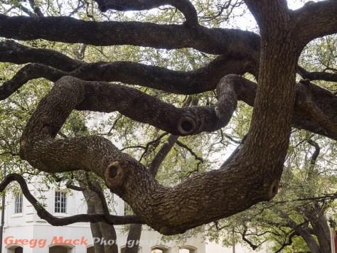 20130316_Univ_of_Texas_Campus_118