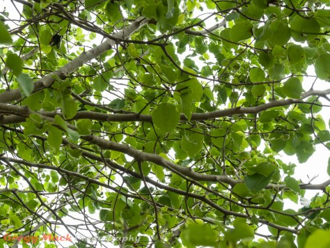 20130407_Tree_and_Deck_012