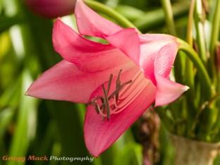 20130615_Zilker_Gardens_052