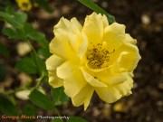 20130615_Zilker_Gardens_096