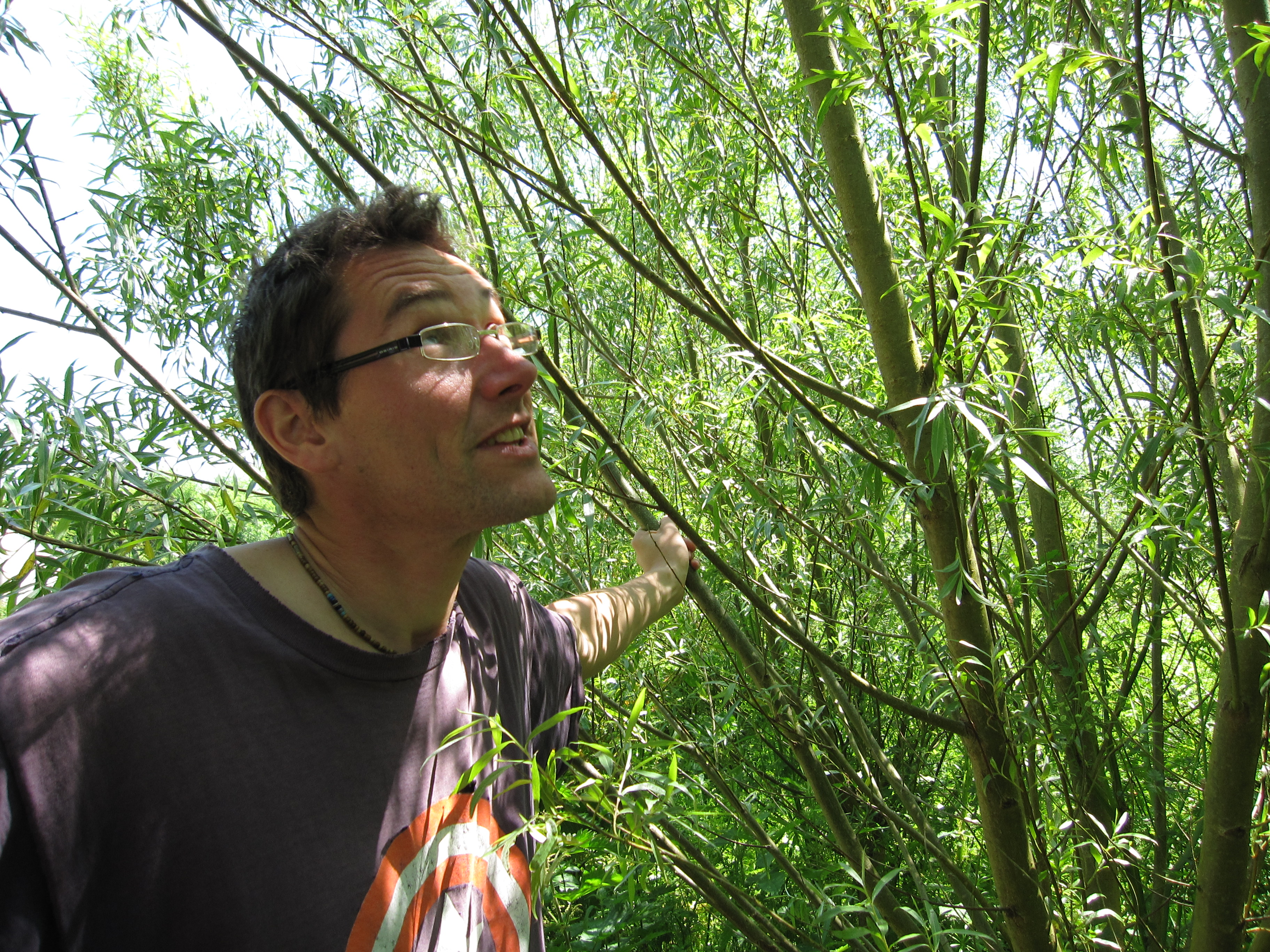 Day 1: Looking at the willow coppice