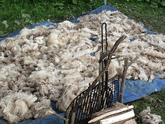 More Drying Of Mary's Fleece.