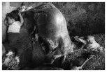 iturbide-artwork-026-dream-la-mixteca-1992