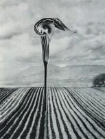 karel-teige-collage-1940s
