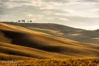 Les champs multicolores proches de San Quirica d'Orcia