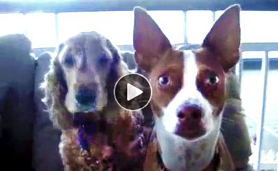 Image of: Americas Funniest Funnyyoutubevideo Clipsofdogswildlyplayingwhowontstopuntiltheyhearthemagicword Los Angeles Corporate Photographer Funny Dog Videothe Magic Word That Freezes These Nut Mutts
