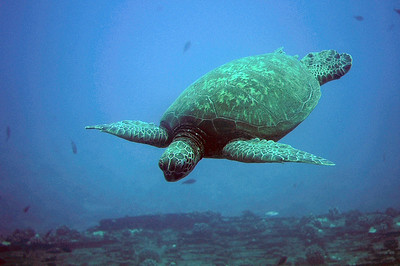 Sea Turtle shot from submarine