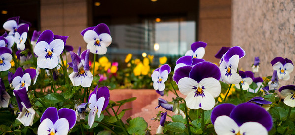 Flowers in front of Tokyo hotel