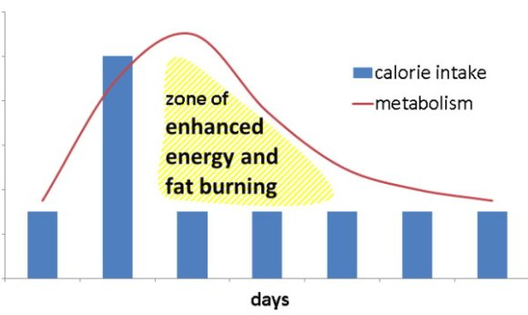 Metabolism after a cheat meal