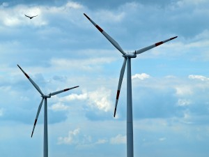 Spinning wind turbines create quite the hazard for birds and bats!