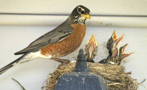 Keep Pest Birds from Building Nests