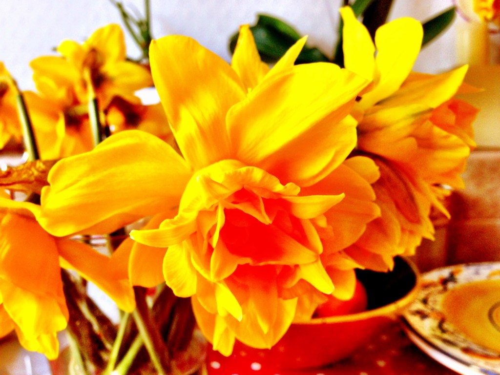 The Case of the Missing Daffodils