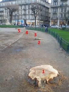 Pas d'ombre cet été sous ces 5 arbres parmi les 20 qui ont été massacrés. La maladie qui les a tués se nomme la tronçonneuse.